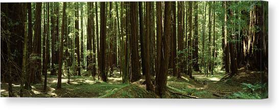 Canvas Print - Redwood Trees Armstrong Redwoods St by Panoramic Images