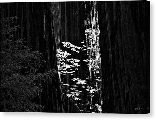 Redwoods Light And Texture Canvas Print by Leland D Howard