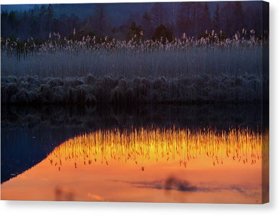 Reed Reflection In Bavarian Moor Lake Canvas Print