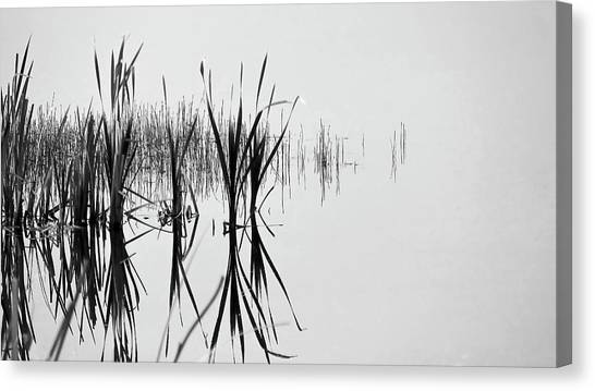 Reed Reflection Canvas Print