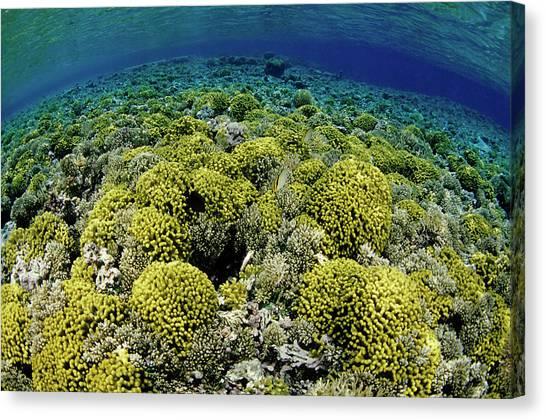 Kimbe Bay Canvas Print - Reef Garden by Tammy616