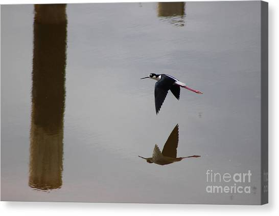 Reflection Of The Salton Sea Black Neck Stilt Flying Canvas Print