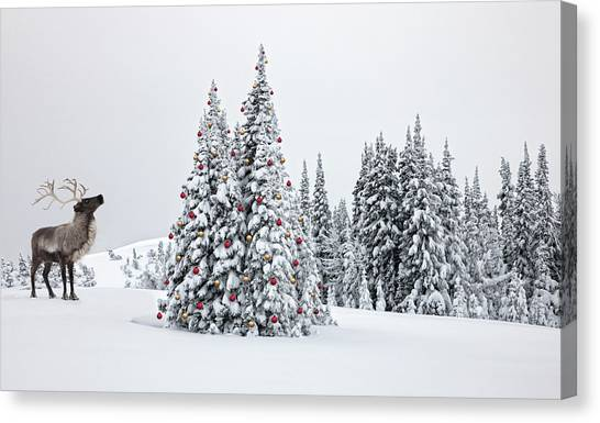 Reindeer Looking At Ornaments On Snowy Canvas Print