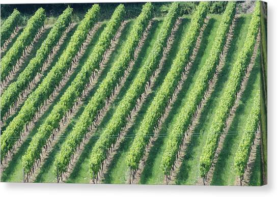 Riesling On The Rhine Canvas Print