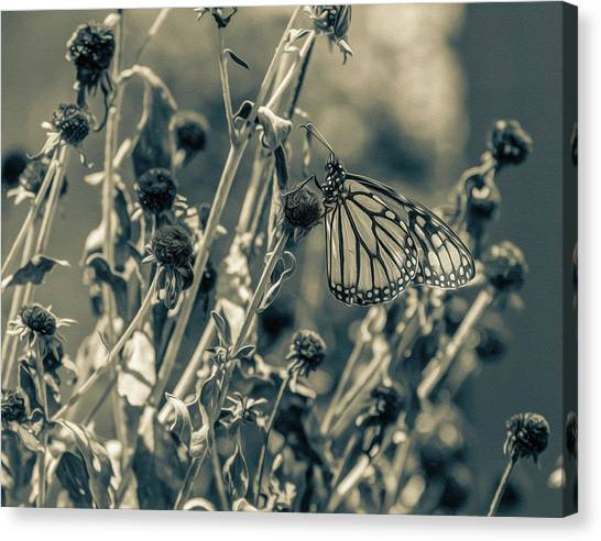 Resting Butterfly Bw Canvas Print