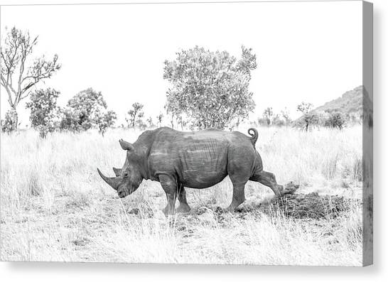 Rhino Business Canvas Print