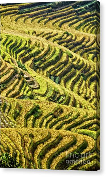 Mountainscape Canvas Print - Rice Terraces In China by Delphimages Photo Creations