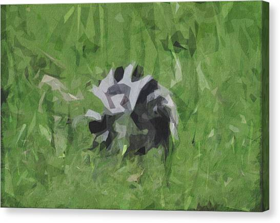 Ring-tailed Lemur Canvas Print - Ring Tailed Lemur Lemur Black White by Draw Sly