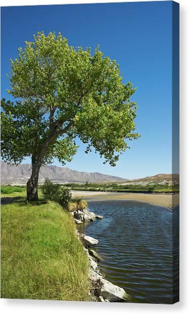 Rio Grande River Canvas Print - Rio Grande River And Cottonwood Tree El by Dszc