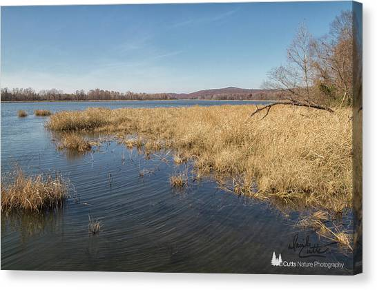 River Grass Canvas Print