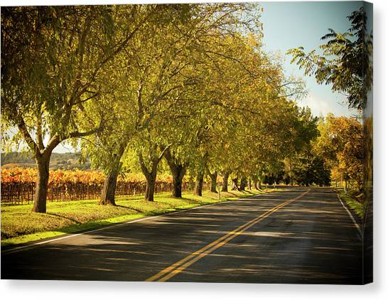 Sonoma Valley Canvas Print - Road Lane In Napa Valley, California by Pgiam