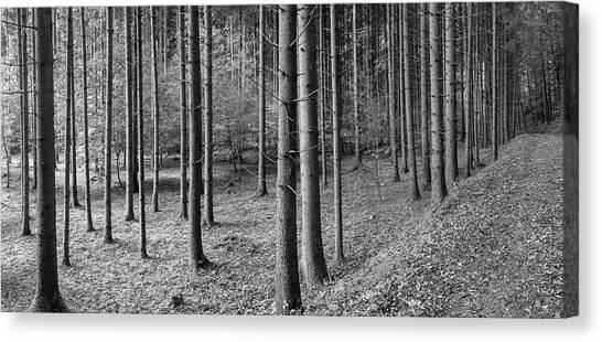 Canvas Print - Road Passing Through Forest, Stuttgart by Panoramic Images