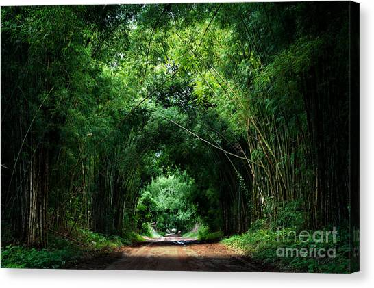 Japanese Gardens Canvas Print - Road With Bamboo by Joesayhello