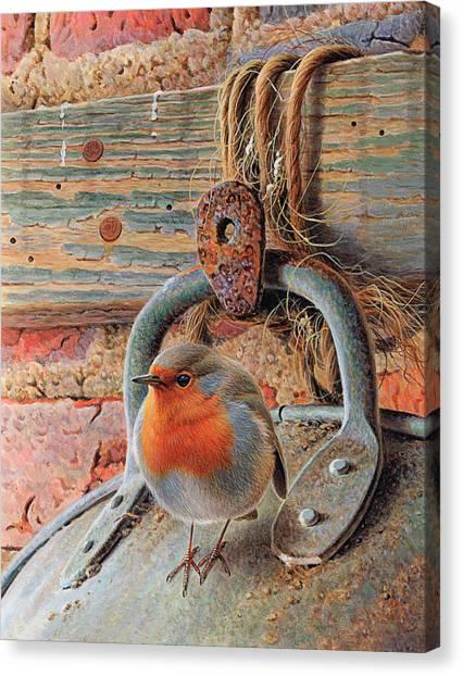 Robin Perching On Metal Bucket Canvas Print