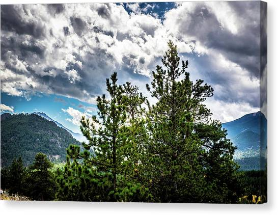 Canvas Print featuring the photograph Rocky Mountain Pines by James L Bartlett