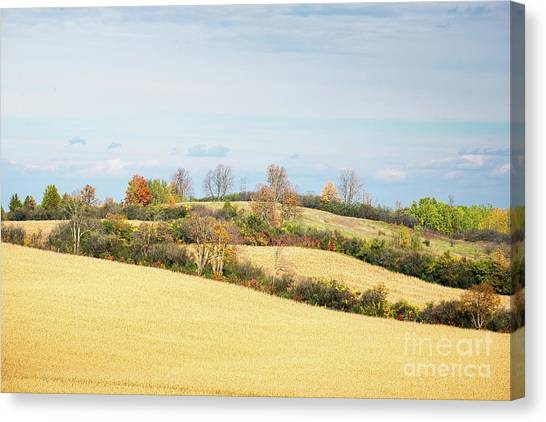 Rolling Hills In Fall Canvas Print