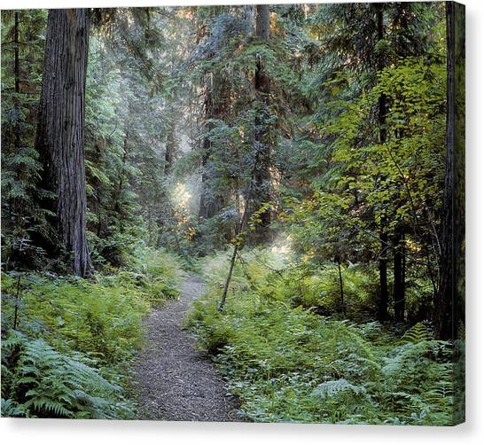 Roosevelt Grove Canvas Print by Leland D Howard