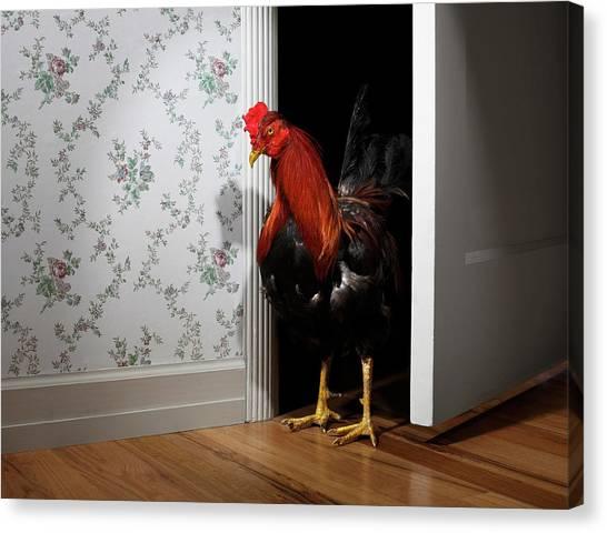 Rooster Entering Bedroom Doorway Canvas Print