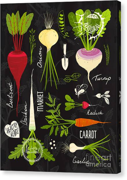 Ingredient Canvas Print - Root Vegetables With Leafy Tops Set For by Popmarleo