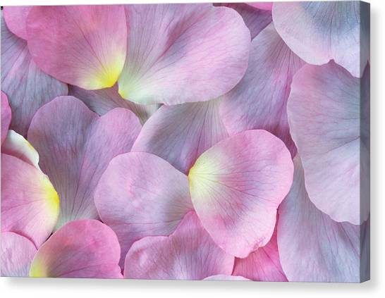 Rose Petals Canvas Print by Martin Ruegner