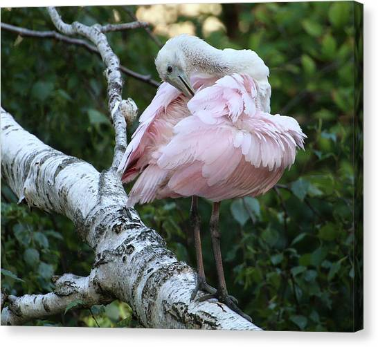 Canvas Print featuring the photograph Roseate Spoonbill 18 by William Selander