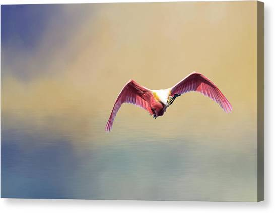 Roseate Spoonbill At Sunrise Canvas Print
