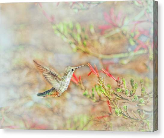 Selasphorus Canvas Print - Rufous Hummingbird In The Arizona Garden by Jennie Marie Schell