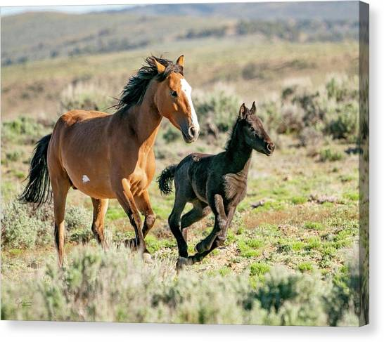 Running Wild Mustangs - Mom And Baby Canvas Print