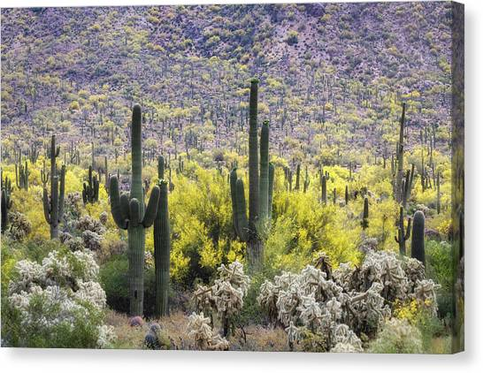 Canvas Print - Saguaro Amongst The Palo Verde by Saija Lehtonen