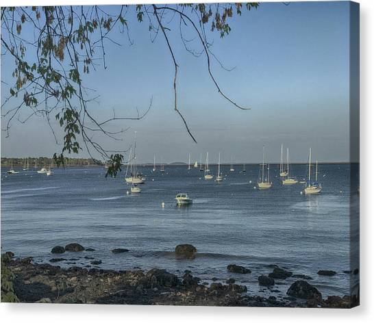 Sailboats In Rockland Harbor Canvas Print