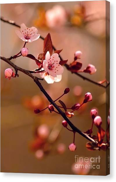 Japanese Gardens Canvas Print - Sakura Flowers by Montypeter