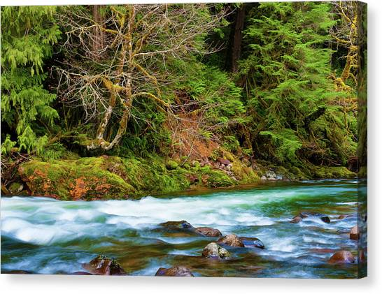 Canvas Print featuring the photograph Salmon River Mt. Hood National Forest by Dee Browning