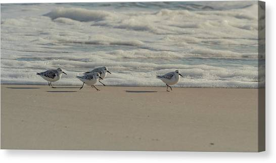 Canvas Print featuring the photograph Sanderlings At Assateague Island National Seashore I 1x2 by William Dickman