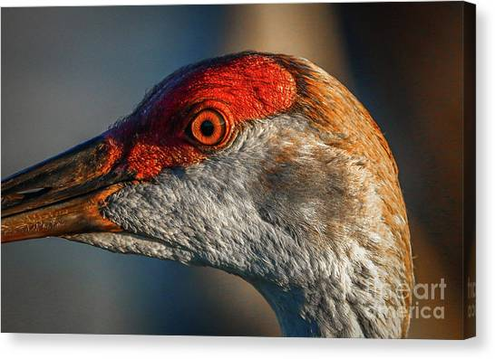 Canvas Print featuring the photograph Sandhill Close Up Portrait by Tom Claud