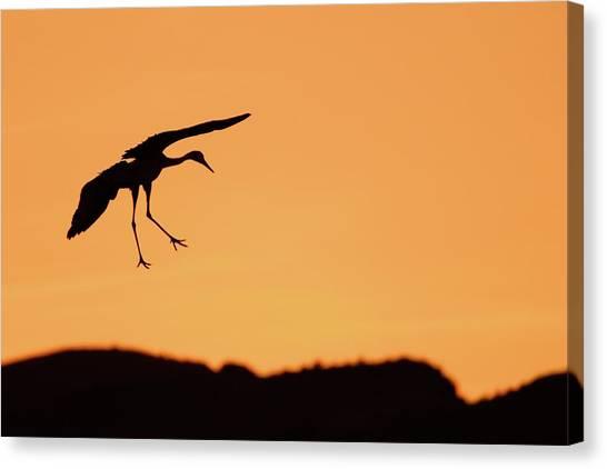 Sandhill Crane Silhouette Canvas Print