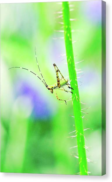 Say Hello To My Little Green Insect Friend Canvas Print