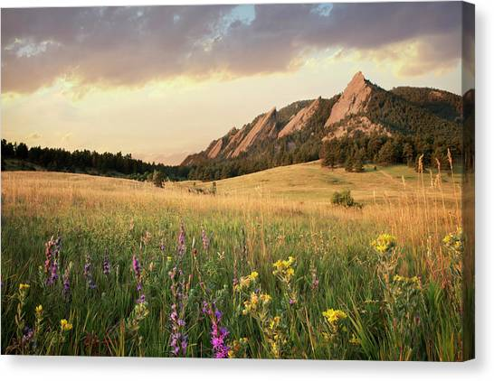 Scenic View Of Meadow And Mountains Canvas Print