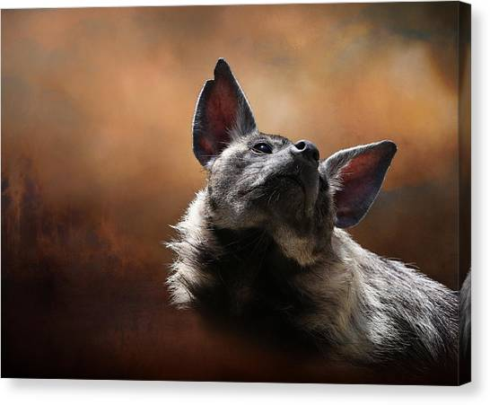 Canvas Print featuring the photograph Scenting The Air - Striped Hyena by Debi Dalio