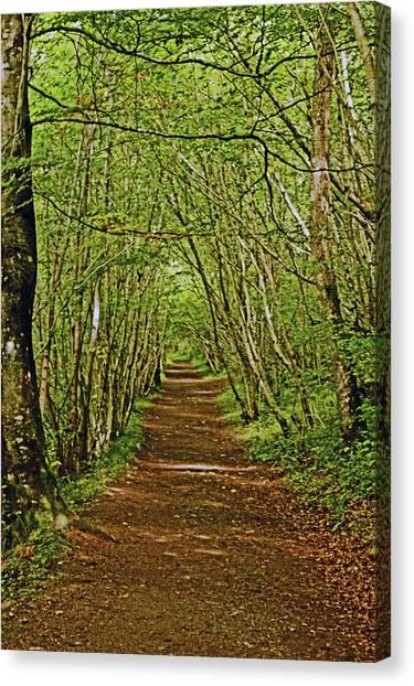 Scotland. Killiecrankie. Path Through The Trees. Canvas Print