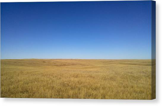 Sea Of Grass Canvas Print