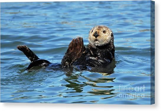 Sea Otter Primping Canvas Print