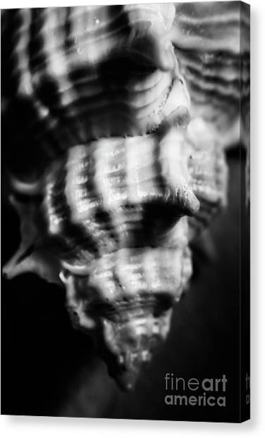 Grey Background Canvas Print - Sea Spiral  by Jorgo Photography - Wall Art Gallery