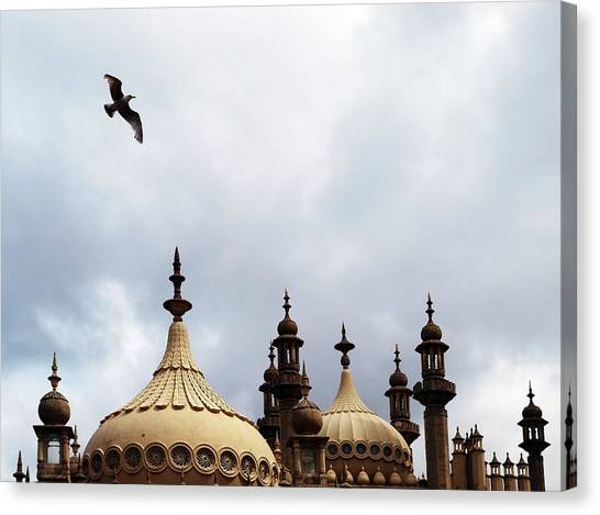 Seagull And Brightonpavillion Canvas Print by Darren Lehane