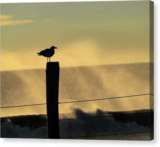 Seagull Silhouette On A Piling Canvas Print