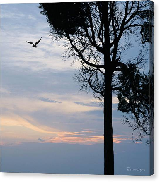 Seagull Sunset At Catawba Canvas Print