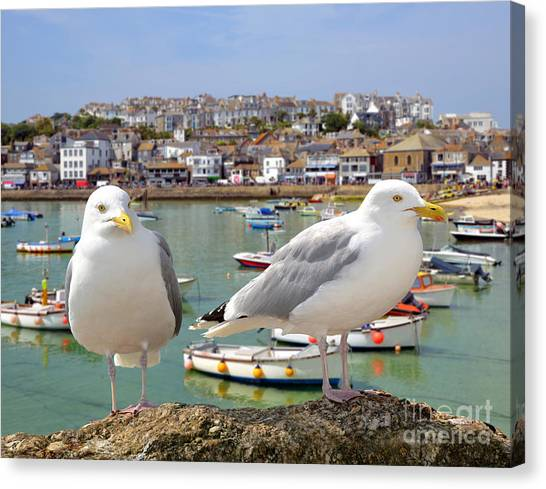 St Ives Canvas Print - Seagulls In St Ives Harbour Cornwall by Jaroslava V