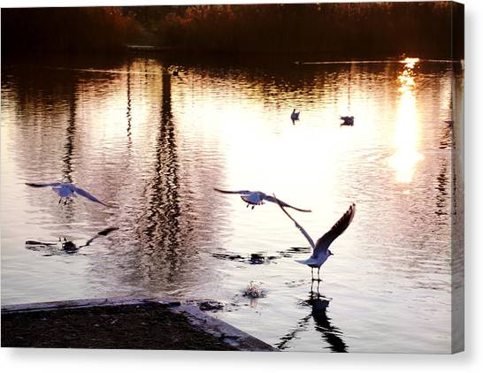 Seagulls In The Morning Canvas Print