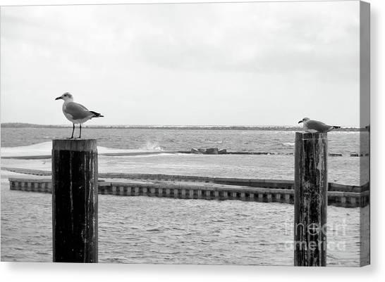 Canvas Print - Seagulls by Megan Cohen