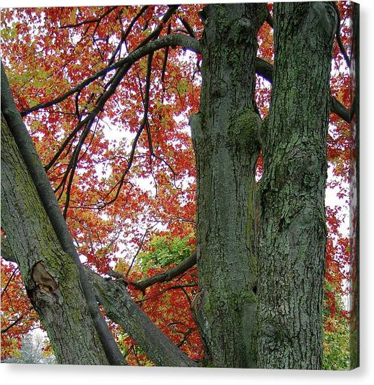 Seeing Autumn Canvas Print