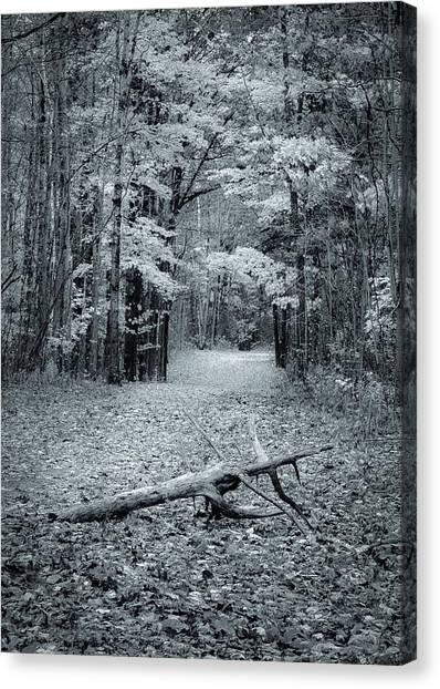 Selenium Trail  Canvas Print